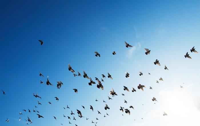 blog-birds