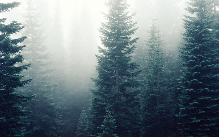 blog-trees